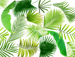 leaf of palm tree background