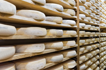 Pile of aging Cheese at maturing cellar in Franche Comte