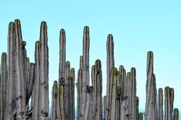 Cacti Color Photography