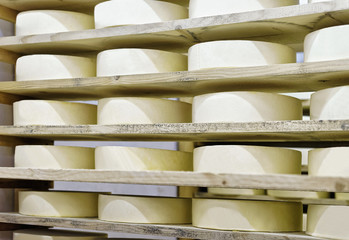 Wheels of young Cheese at maturing cellar Franche Comte