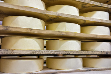 Wheels of young Comte Cheese at maturing cellar Franche Comte
