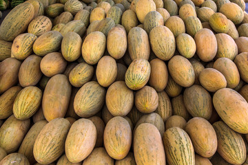 Melons. Uzbekistan