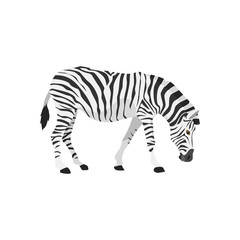 zebra was feeding illustration