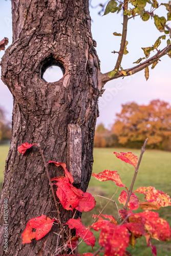 baum im herbst imagens e fotos de stock royalty free no imagem 128076040. Black Bedroom Furniture Sets. Home Design Ideas