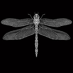 Zentangle stylized dragonfly . Hand-drawn vector illustration.