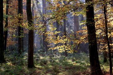Lichteinfall im Herbstwald