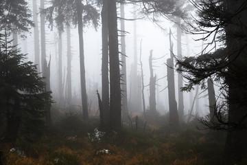 Mystisch dunkle Wälder im Hochharz am Brocken