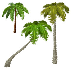 Three palm trees on a white background