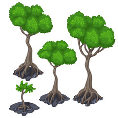Stages of growing tropical tree, four icon