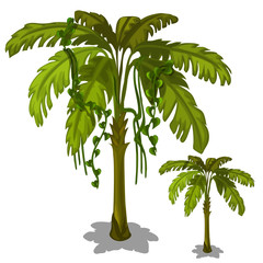 Palm tree on a white background. Vector