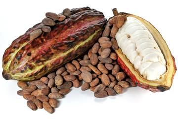reife Kakaofrüchte und gerösteten Kakaobohnen isoliert auf weißem Hintergrund