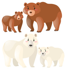 Grizzly and polar bears