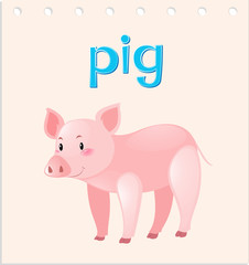 Flashcard with word and picture of pig