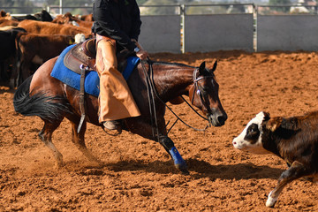 Cowboy roping a little cow during the cutting horse event