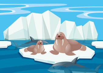Walrus and shark in north pole