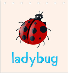 Word card with ladybug insect