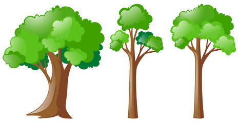 Three types of tree
