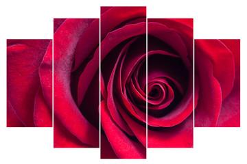 Red rose image collage, floral interior decor mock up