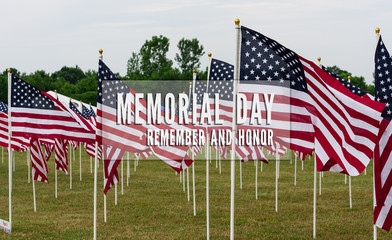American Flags in Field Memorial Day