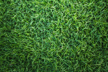 grass background. green grass texture or background top view of natural for golf course and soccer field abstract pattern r