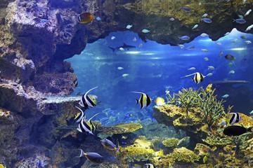 Kyoto Aquarium Kyoto Japan