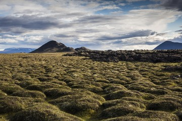 Lava fields covered by moss in Krafla Caldera, Myvath, Iceland,