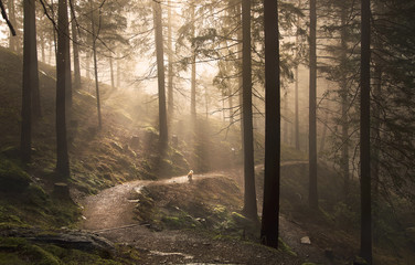 Footpath in forest with sunbeams Wall mural