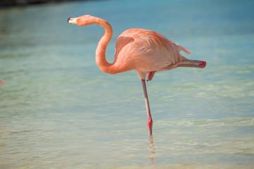 Foto op Aluminium Flamingo One flamingo on the beach