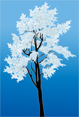 high pine in snow on blue background