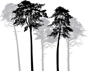 five pine silhouettes isolated on white