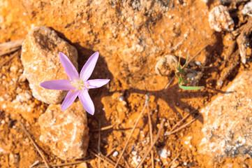 Fiore visto dall'alto