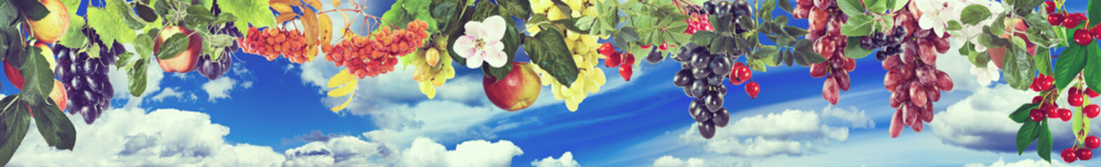 Image of sweet apples, grapes,raspberries and cherries