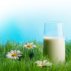 Glass of milk in grass with daisies