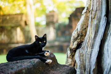 Black cat resting on oldstone.  tree outdoor on summer in wild nature