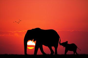 elephant with baby elephant