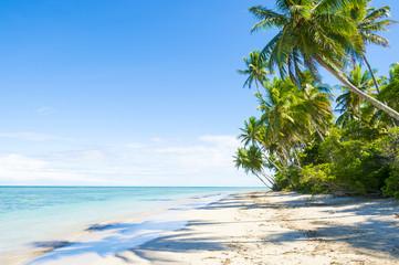 Palm trees cast shadows on wide remote tropical Brazilian island beach in Bahia Nordeste Brazil