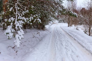 Road in the snowy winter forest. Christmas background. Christmas tree.