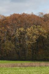 autumn field in Poland