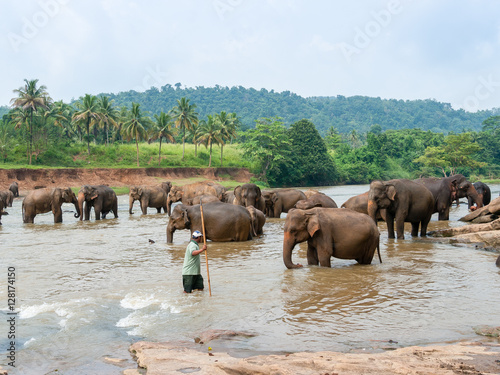 Mahout and Group the elephants by the river against the backdrop of rainforest and palm trees