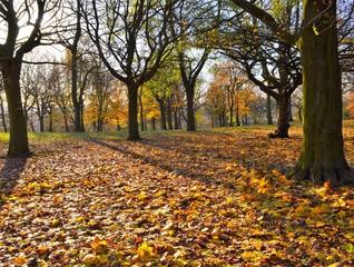 A colourful late Autumn landscape.