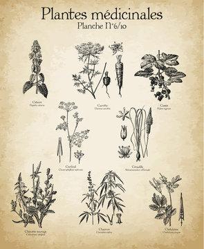 Gravures anciennes plantes médicinales N°6/10