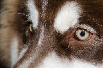 .Beautiful brown dog eyes shining light.