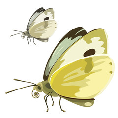 Butterfly with yellow wings. Vector insect