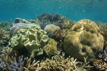 Coral reef diversity with soft and hard corals underwater, New Caledonia, south Pacific ocean