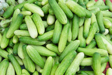 Fresh green cucumber, on the market.