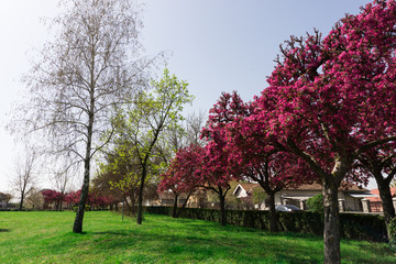 trees on the spring