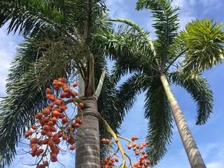 areca palm tree in nature garden