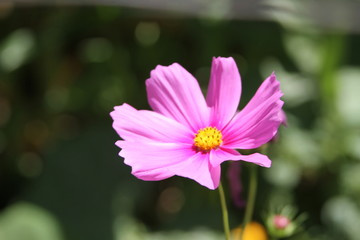 The Pin Flower