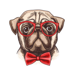 Hand drawn illustration of pug in glasses and a bow tie