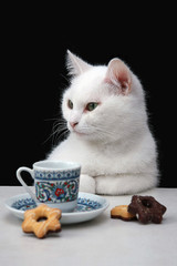 Pretty white cat with a cup of coffee and cookies